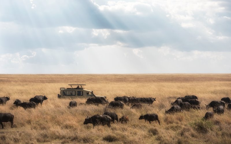 Serengeti - Reisezeit